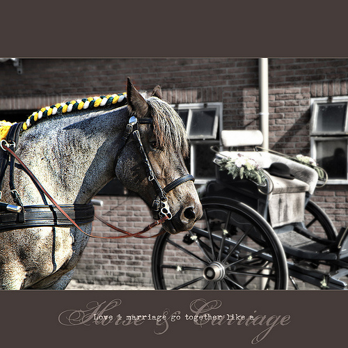 ... horse & carriage ...